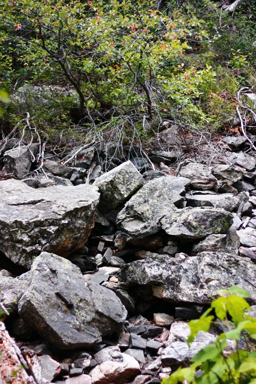 Rocks along the Fish Creek Falls hike. Submitted by: Dan Engel