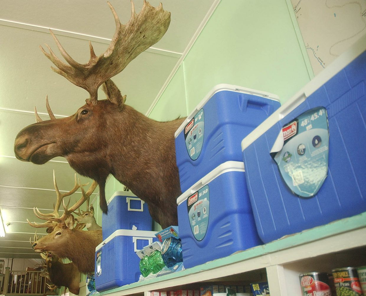 A stuffed moose sticks its head out between coolers for sale at the store.
