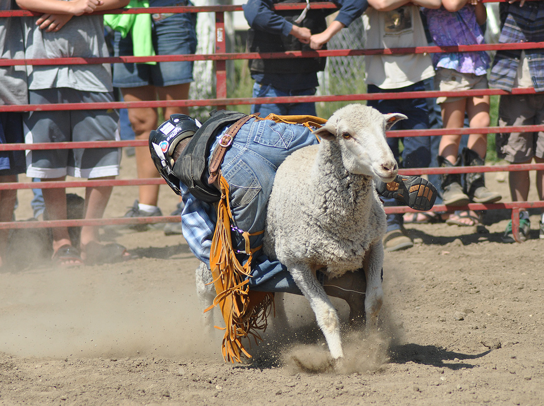 Mutton Bustin' at the 2012 Routt County Fair. Submitted by: Wendy Lind