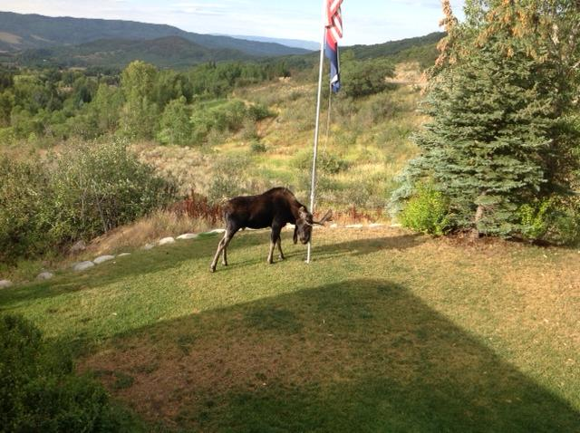 Frequent visitor who likes to rub against our flagpole. Submitted by Sandi Martin