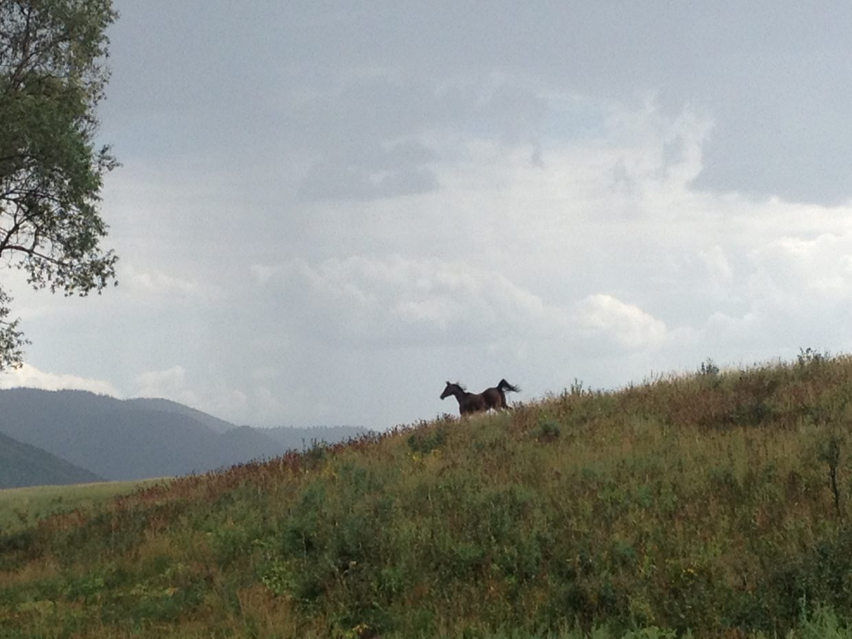 Kalisha (Arabian) running at Dels Triangle Three Ranch in Clark. Submitted by: Michelle Sommerville