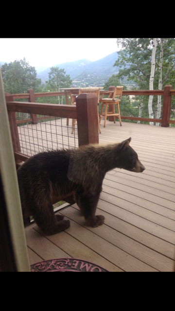 Visitor at TreeHaus. Submitted by: John Hoover