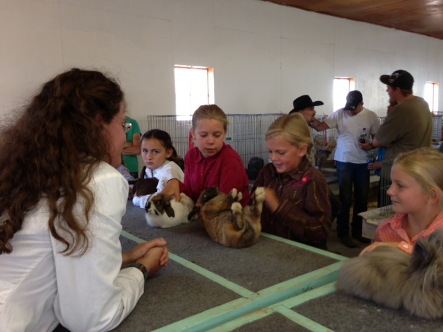 Caroline McLaughlin shows her rabbit at the Routt County Fair on Thursday. Submitted by: Lauren McLaughlin