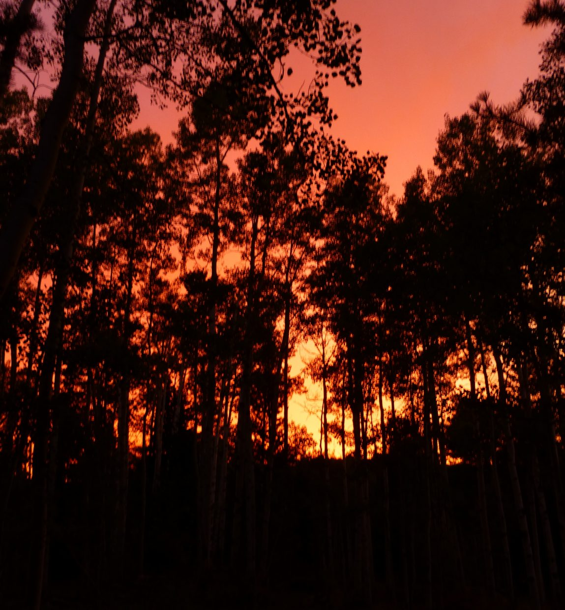 Sunset in the trees. Submitted by: Gail Hanley