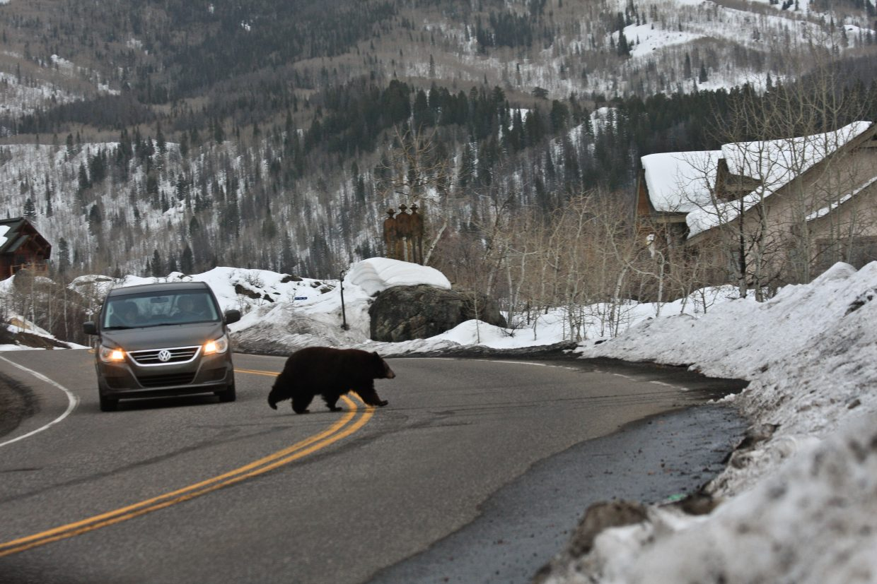 The bears are out. This mama and baby were spotted alongSteamboat Blvd. on Monday, submitted 3/22/11 by Claudia Morin.