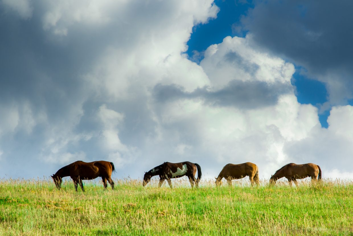 Horses grazing near Twentymile Road. Submitted by: Michael Burns