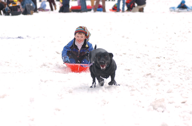 Slade Schmidt, 4, is pulled by his dog, Rocky, during the 25-yard Dog and Dad Dash.