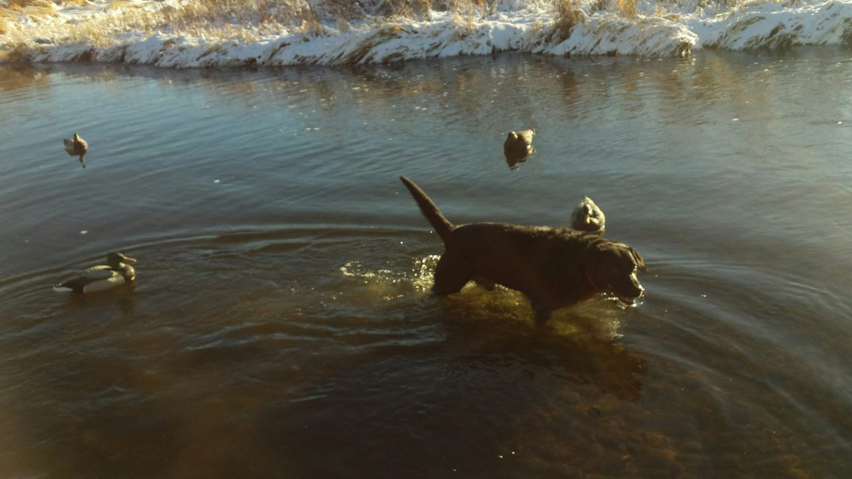 Where's the snow? Let's play in the river!