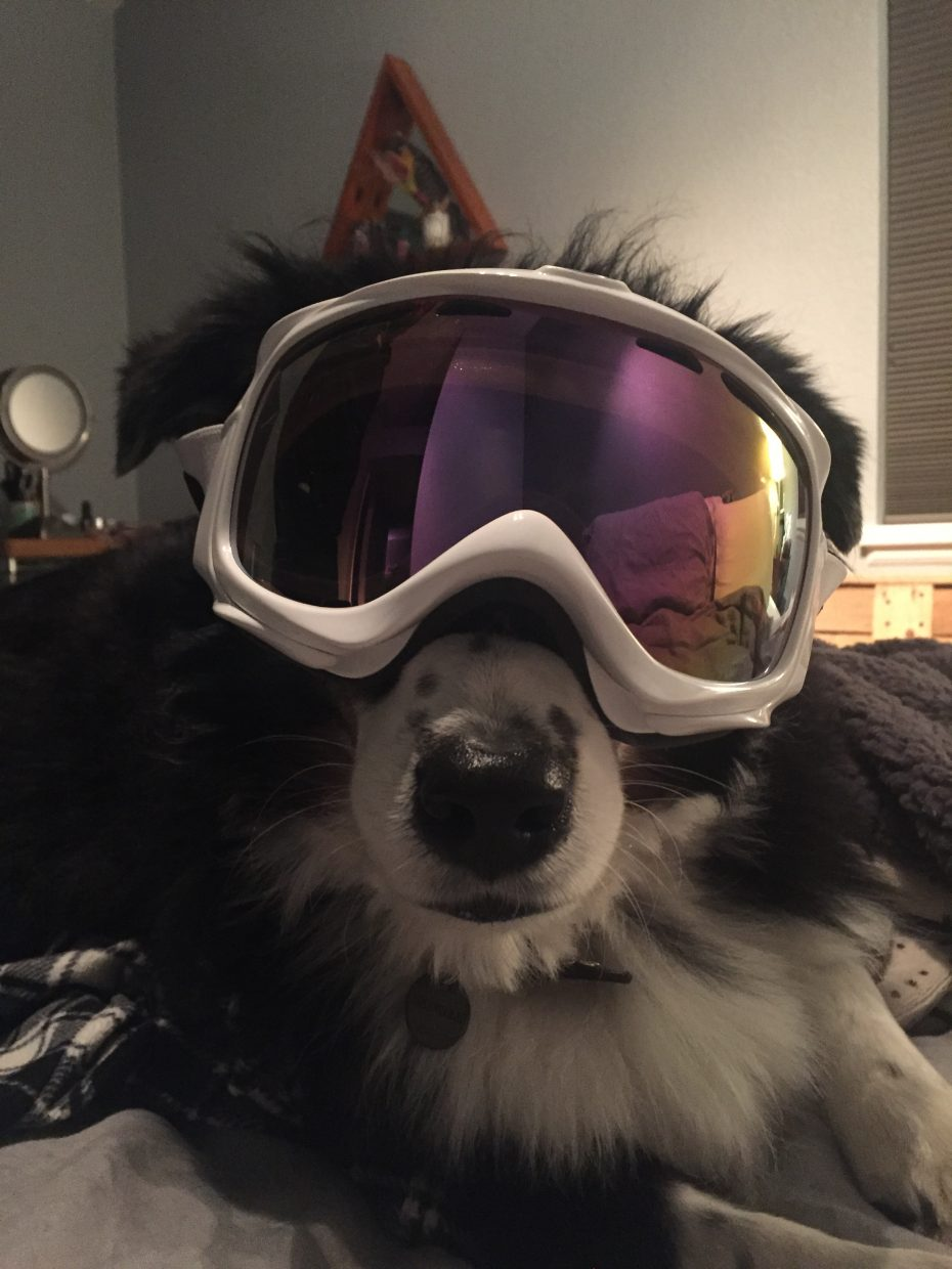 This doggie is ready for some snow!