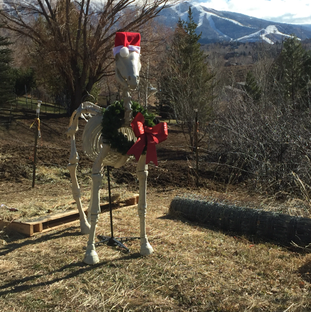 'Slim,' up on Deerfoot, is all ready for the holidays.