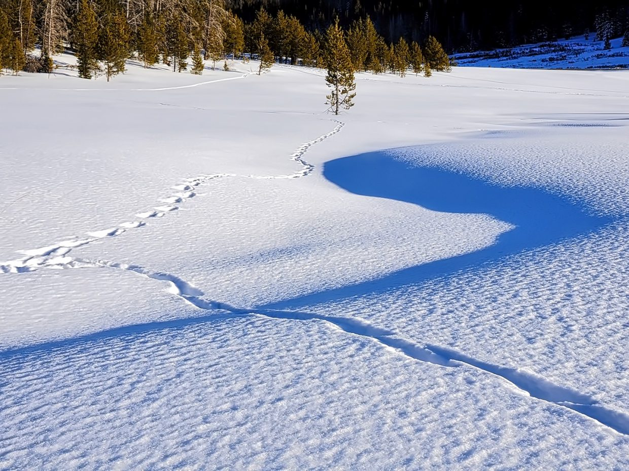 Tracks in the snow on Rabbit Ears Pass.