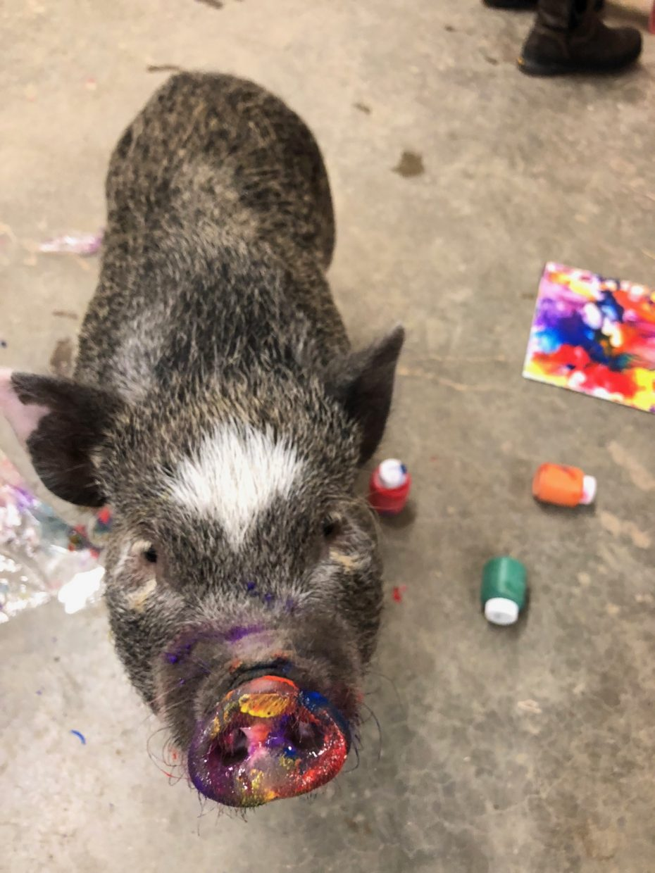 Three Legged Mini Pig Paints For A Cause 4 The Love Of Art And