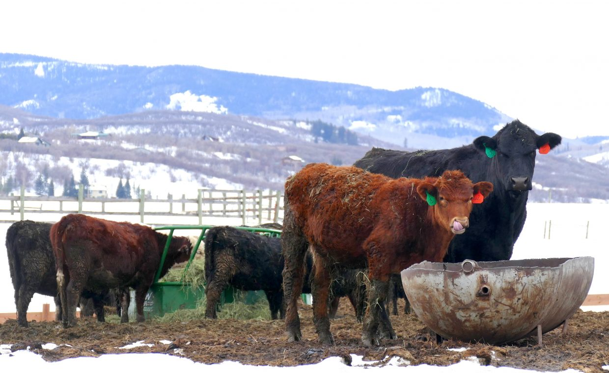 These two were spotted enjoying the afternoon, off Highway 131, near the turnoff to Stagecoach.