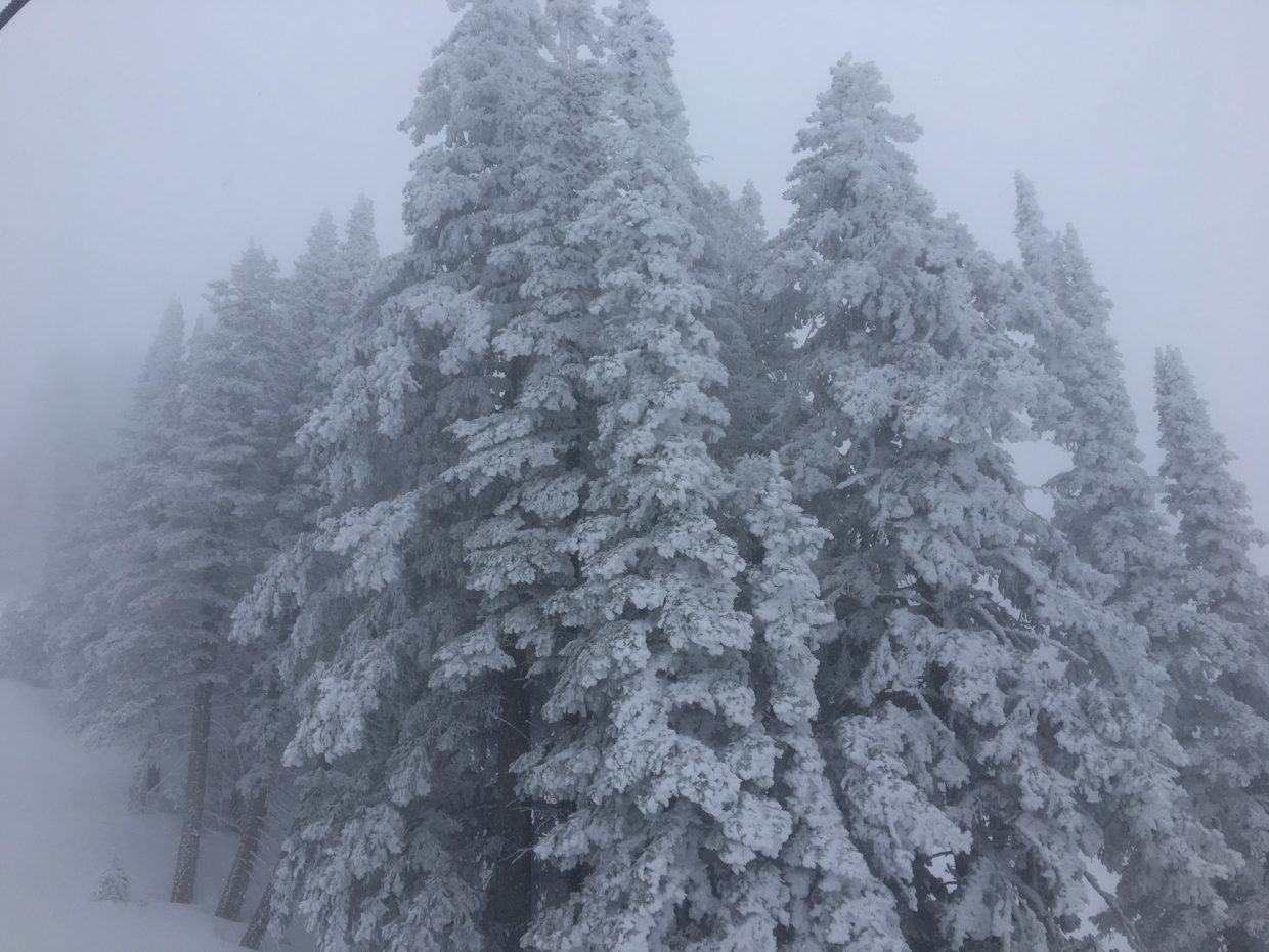 A shot of trees along the trails of the Steamboat Ski Area.