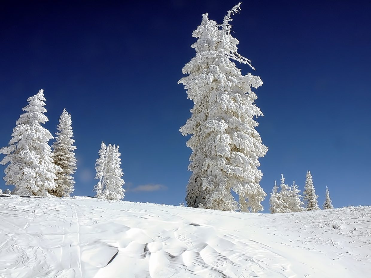 A shot of trees still covered in snow at the top of Storm Peak.