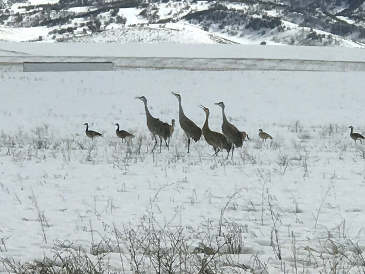 A shot of cranes along Routt County Road 42 on Saturday, March 24.