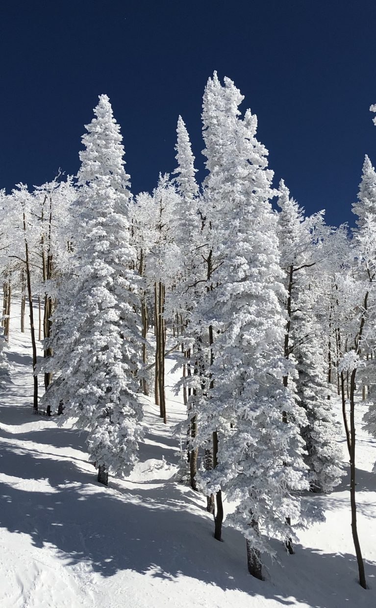 A shot of snow covered trees.