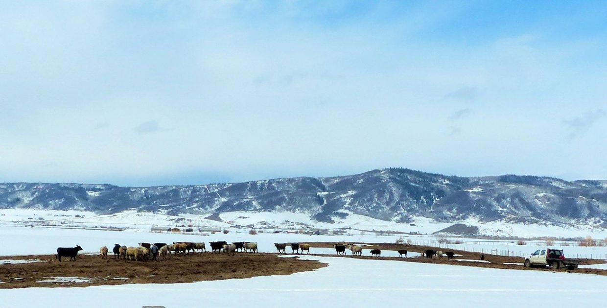 A man goes out to feed his cattle along U.S. Highway 40, near the base of Rabbit Ears Pass.