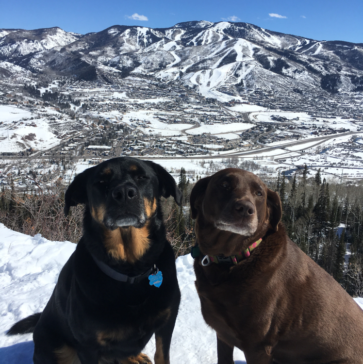 Wonderful day for a hike up Emerald with the dogs!  Taking advantage of the off leash Blackmere trail.  Thank you Steamboat for opening this trail for off leash use.  Bennett (black Rottweiler/lab rescue) and Rider (chocolate lab).  Happy dogs!