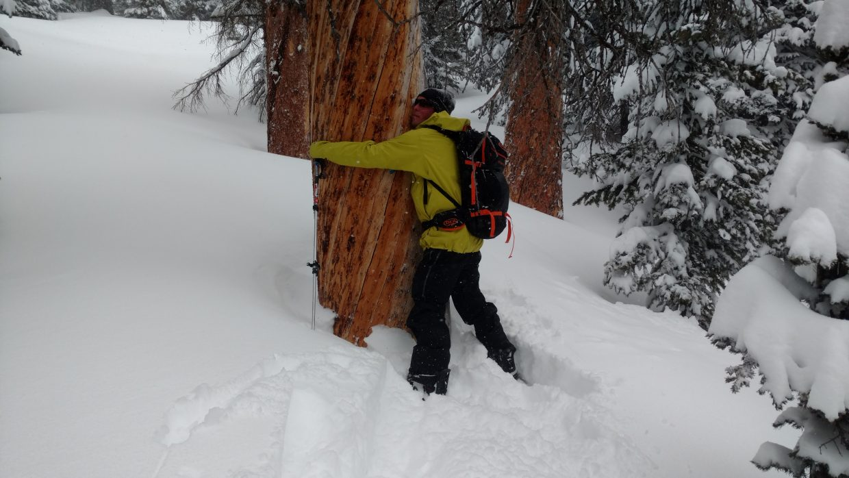 A man hugs a tree while back country skiing.