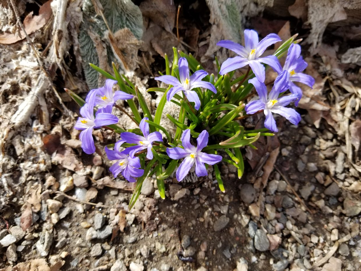 Flowers bloom in the Yampa River Botanic Park.