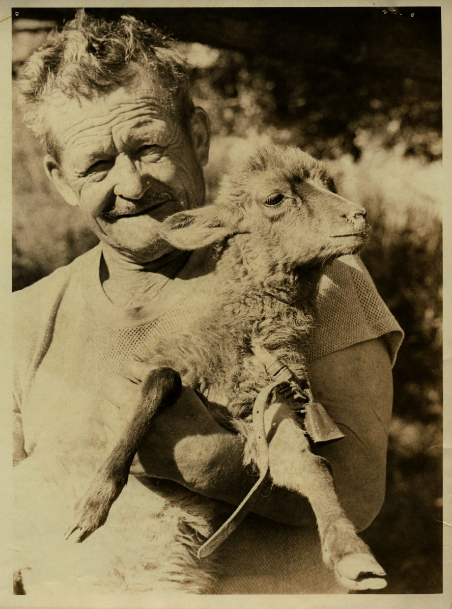 Lower Elk River  Rancher Ralph Guire holds a hybrid lamb that was the product of a
