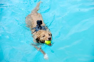 Poochy Paddle splashes back into Old Town Hot Springs on Sunday