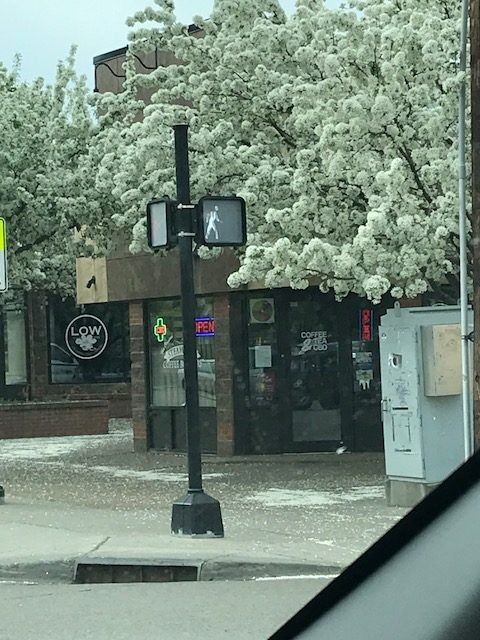 Trees downtown are starting to show off their blossoms.