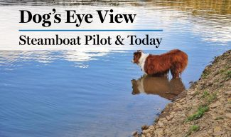 Dog's Eye View: We give them the world