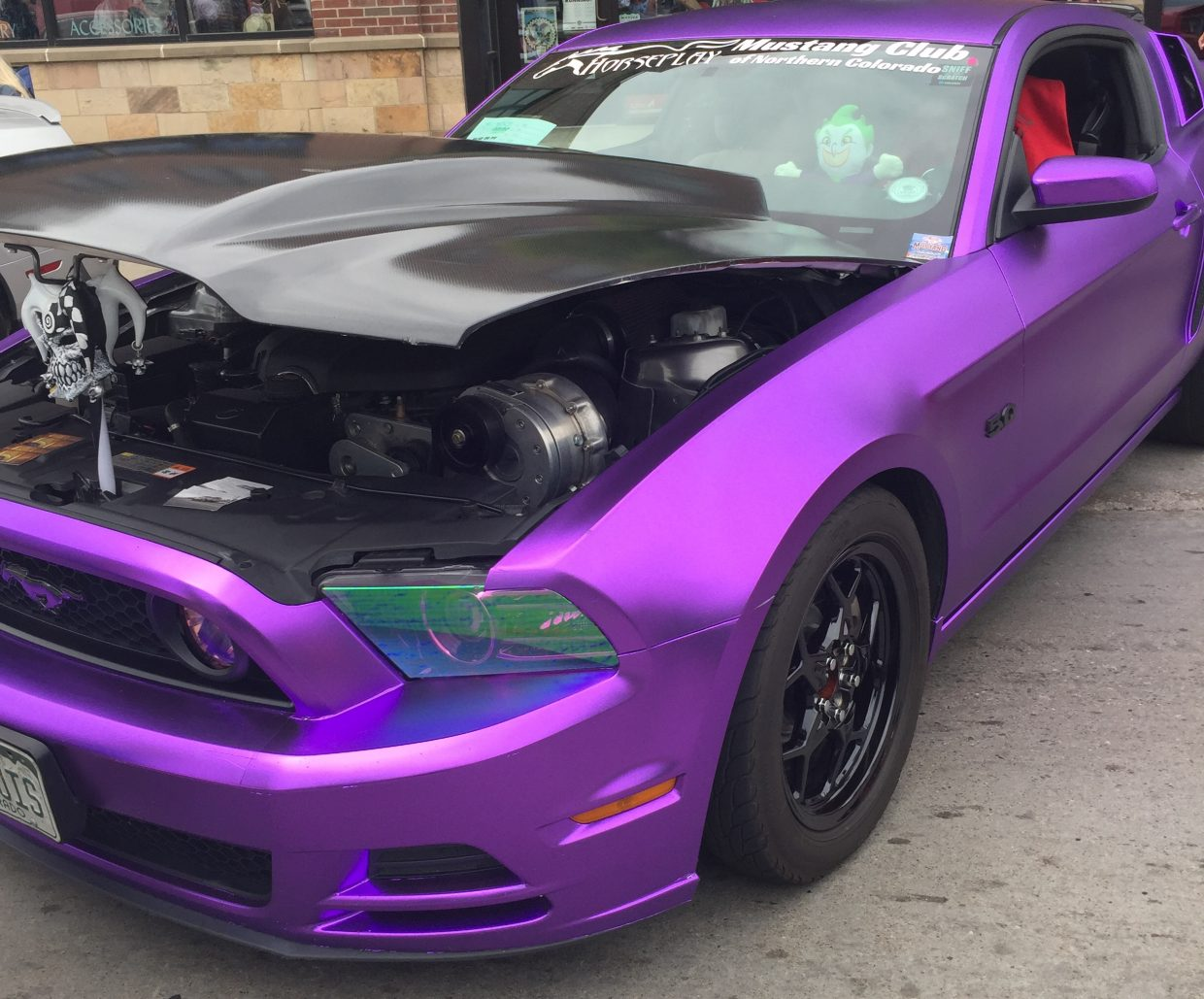 A purple mustang stands out during the Mustang Round-Up.