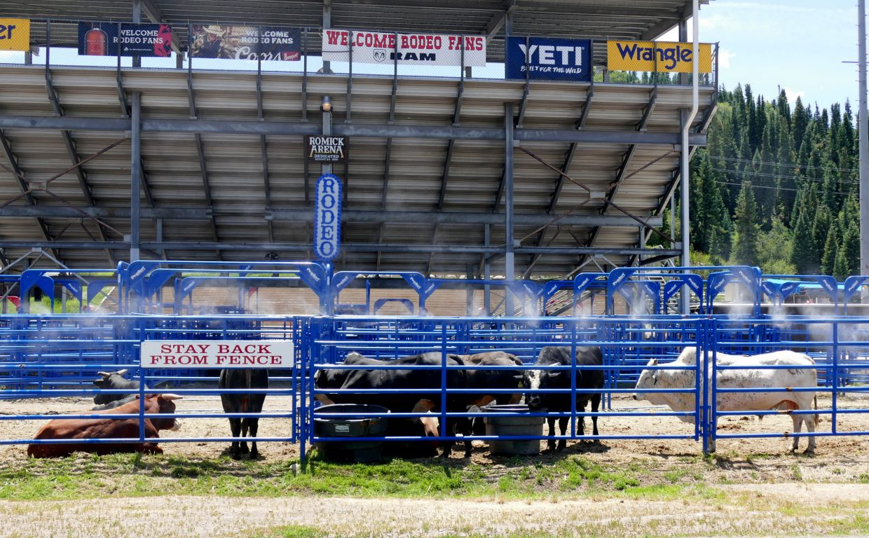 It's hot! Here are some bulls hanging out at Romick (roe-mick) Arena in Steamboat, waiting for the Steamboat Pro Rodeo Friday and Saturday night. They have a cooling misty spray keeping them nice and cool on a hot summer day like today.