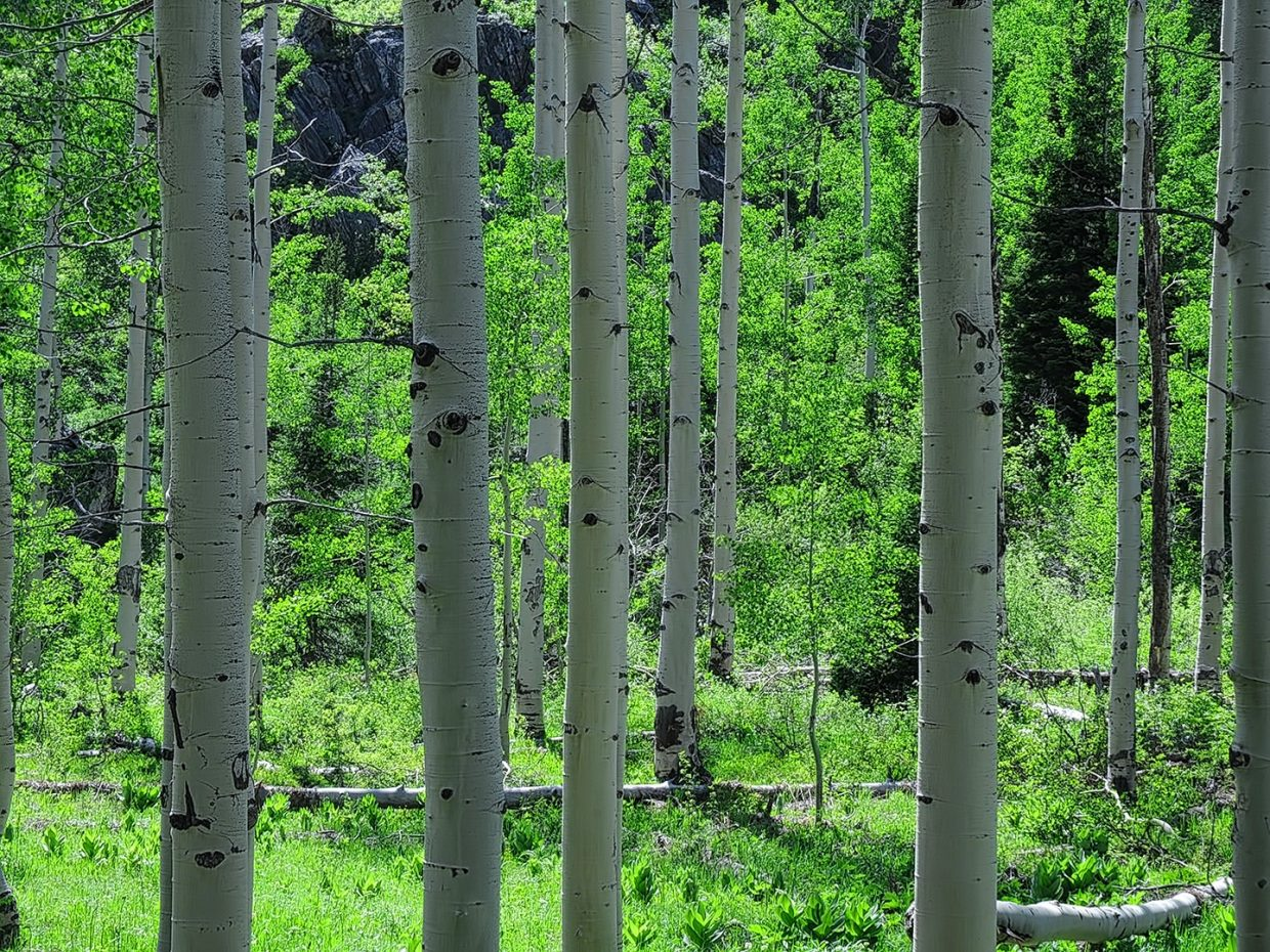 Spring Creek Trail in Routt County.