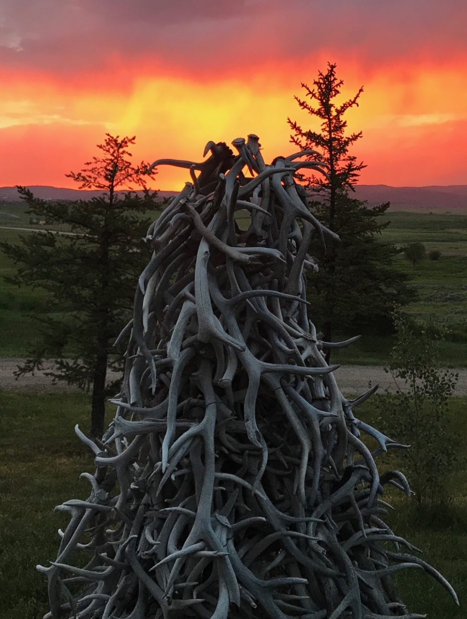 Antler tree sunset in Routt County.