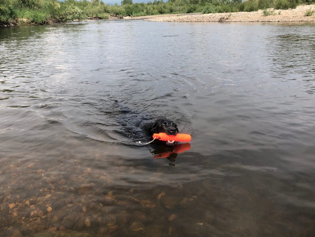 Taking a dive in the Yampa River.