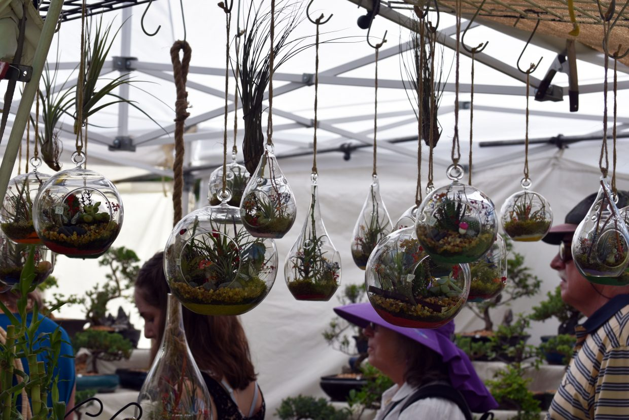 Air plant terrariums dangle from Lily's Florist & Gifts' booth at Art in the Park in Steamboat Springs on Sunday.