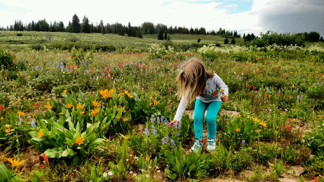 A little girl admires wildflowers on Rabbit Ears Pass.