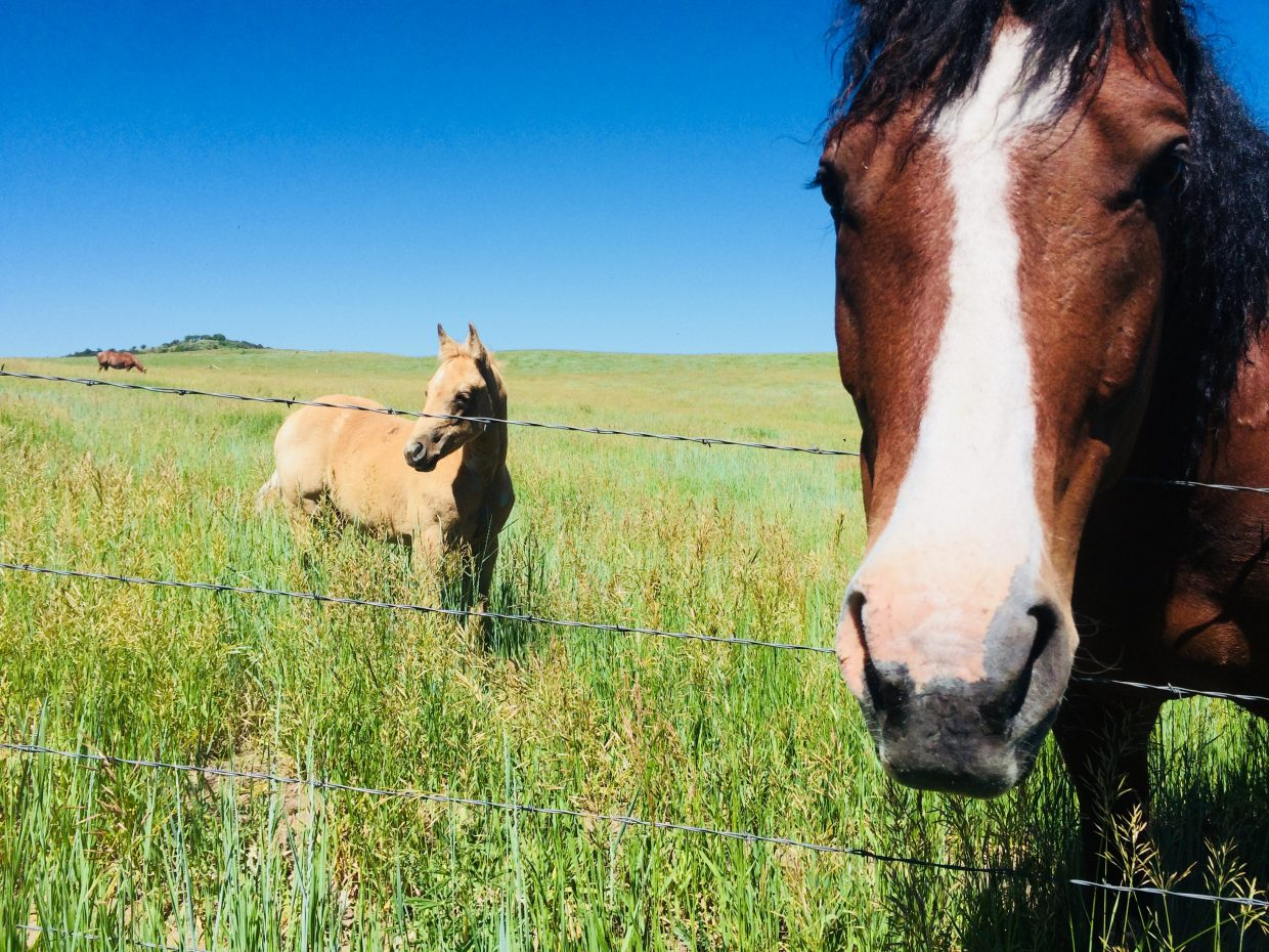 Horses on Routt County Road 14, during a bicycle ride