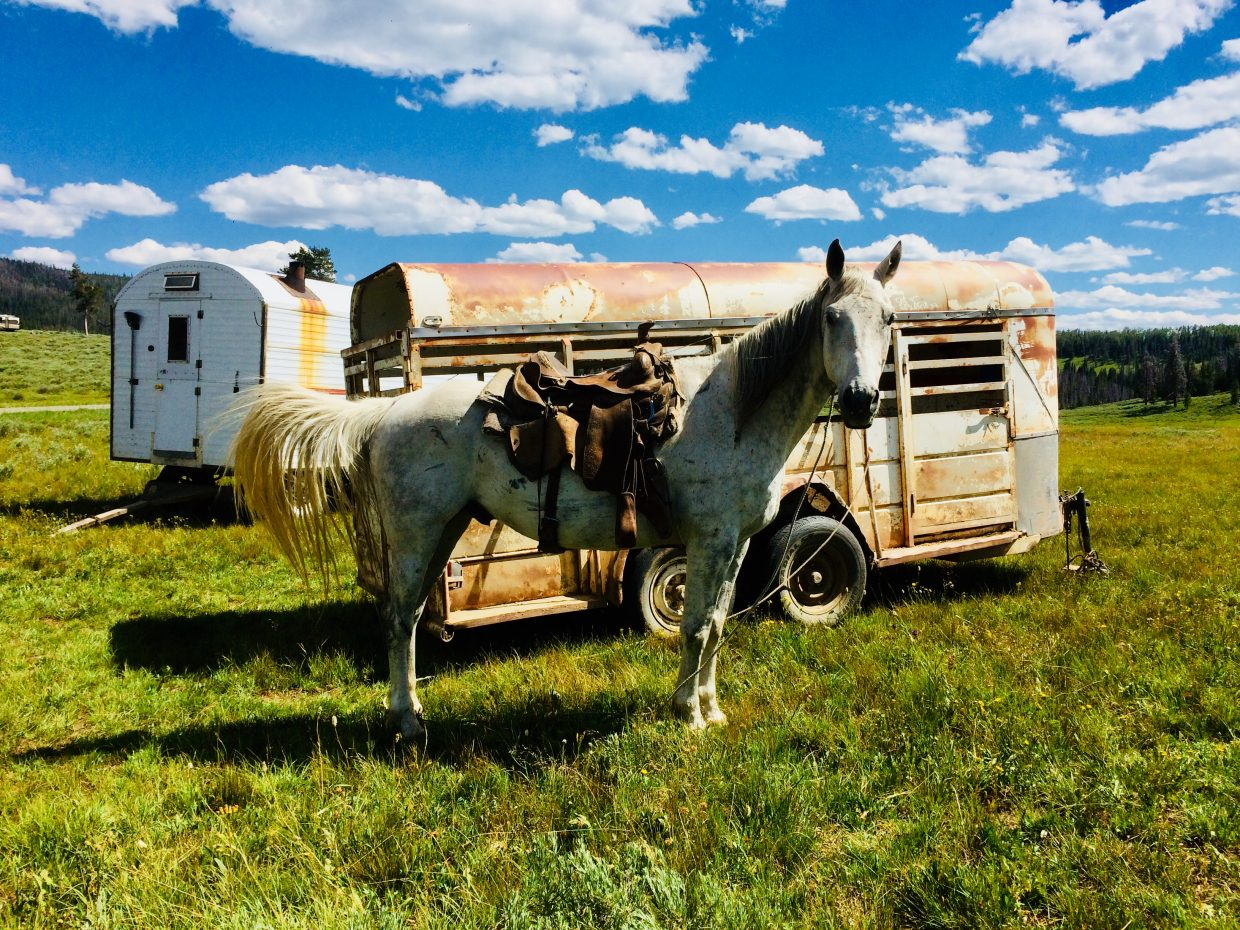 A sheep herder's horse waits to start the day at Routt County National Forest Pioneer Trailhead.