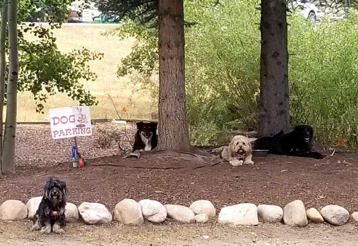 Dogs hang out in the shade (or the dog parking spot).
