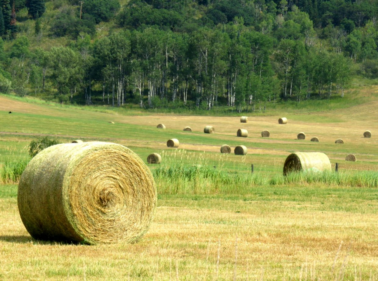 Hay Bales in Strawberry Park