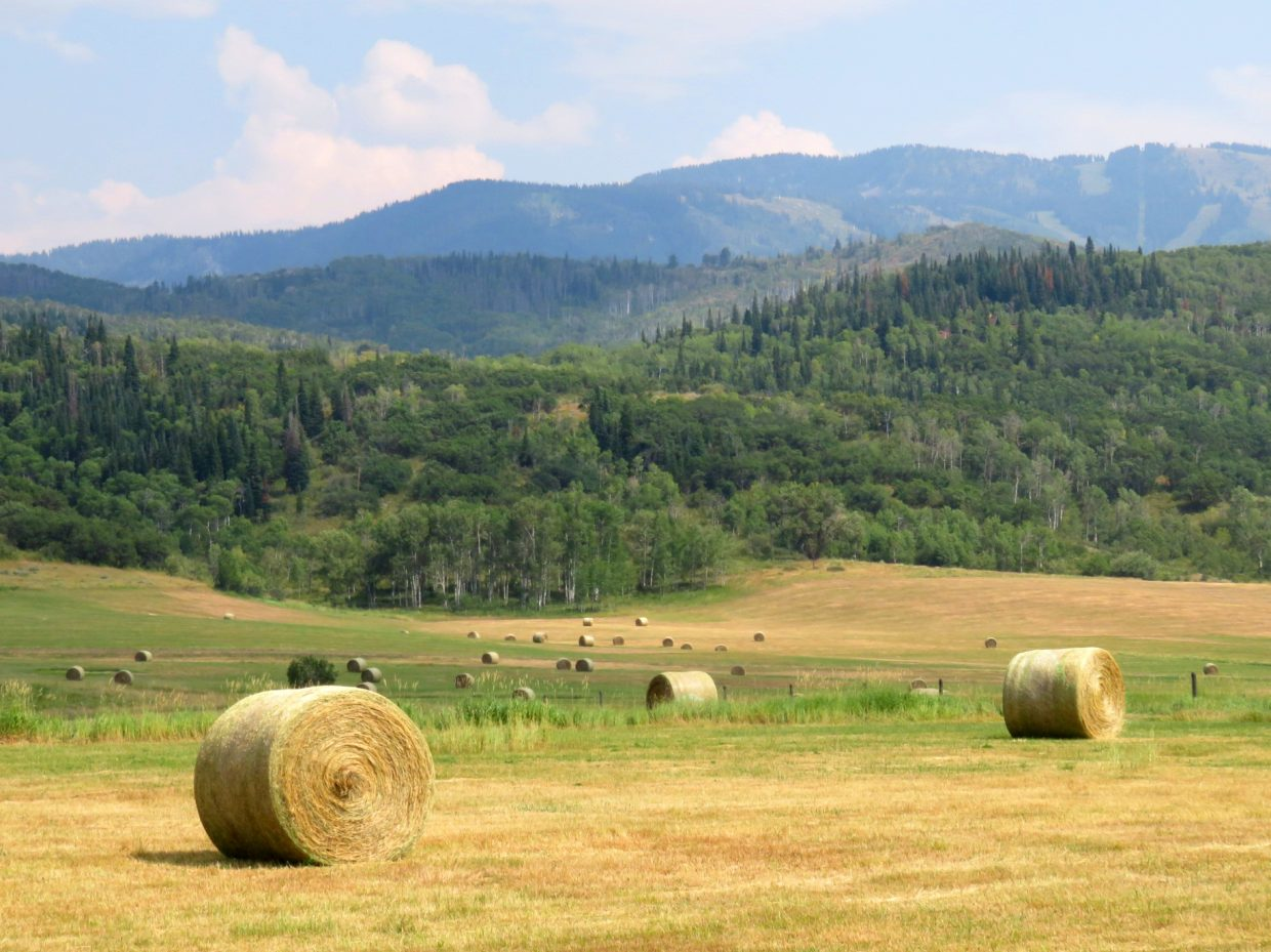 Strawberry Park bales