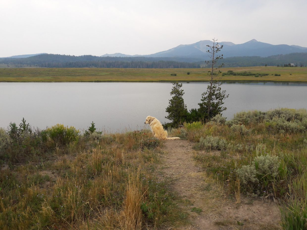 A dog watches for chipmunks at Steamboat Lake.