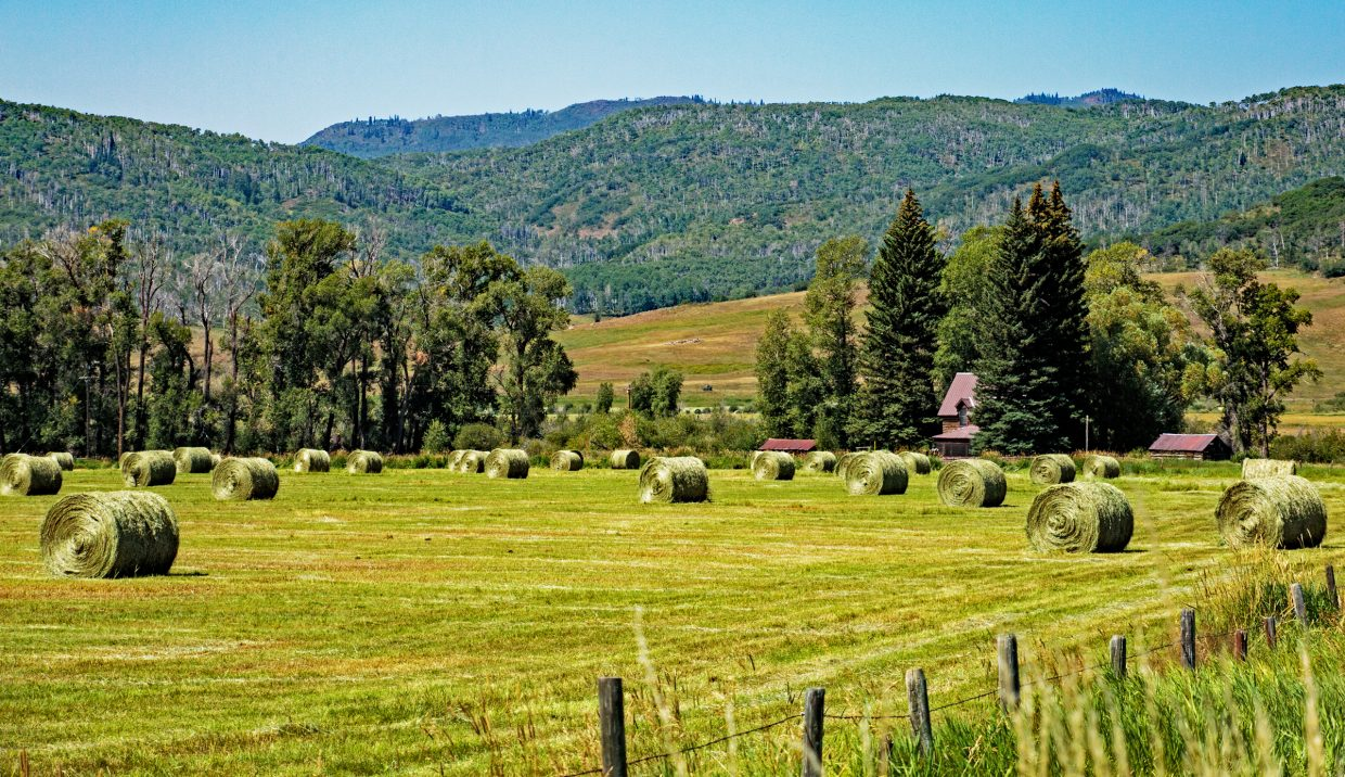 Hay bales are scattered across a field in Routt County.