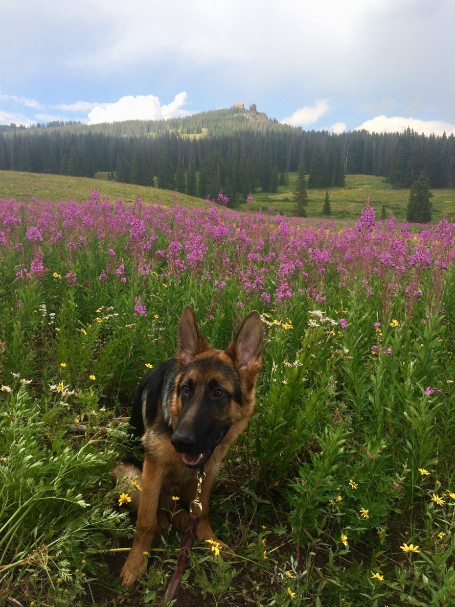 Enjoying the wildflowers.