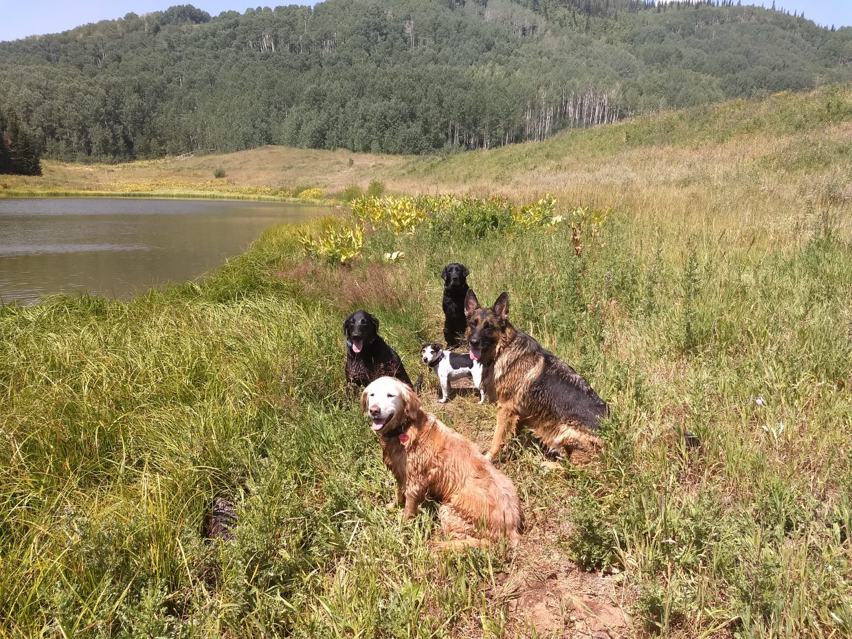 Dogs enjoy a fun day at the Flat Tops Wilderness Area.