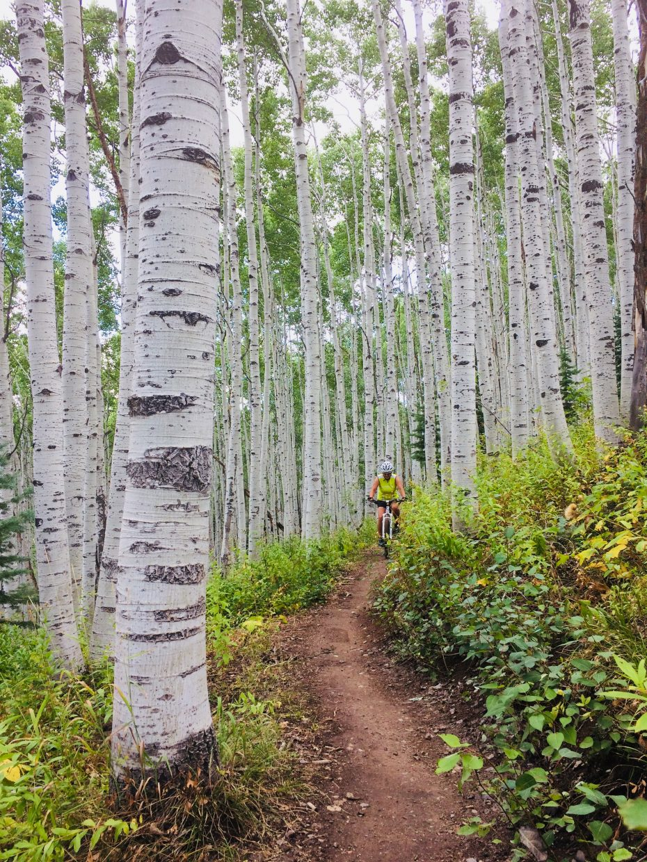 A person hikes along Flash of Gold trail on Buffalo Pass.