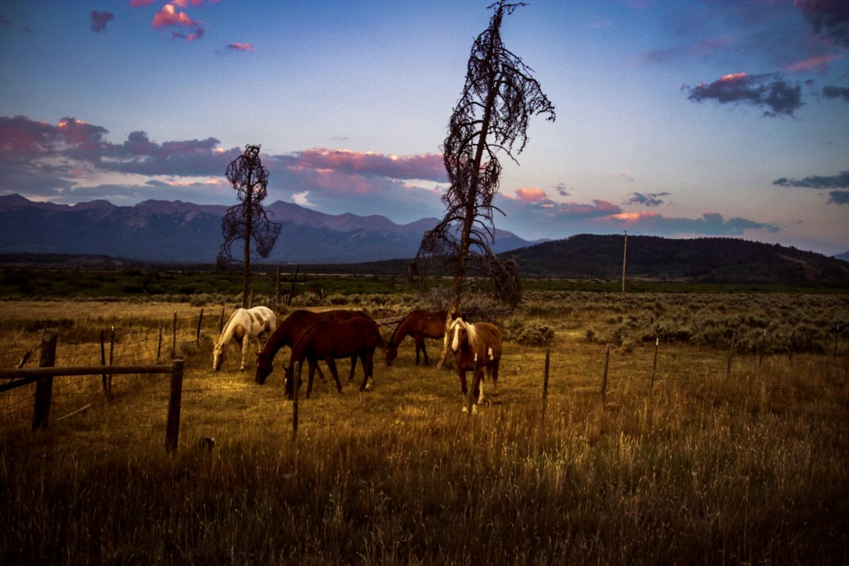 Routt County horses