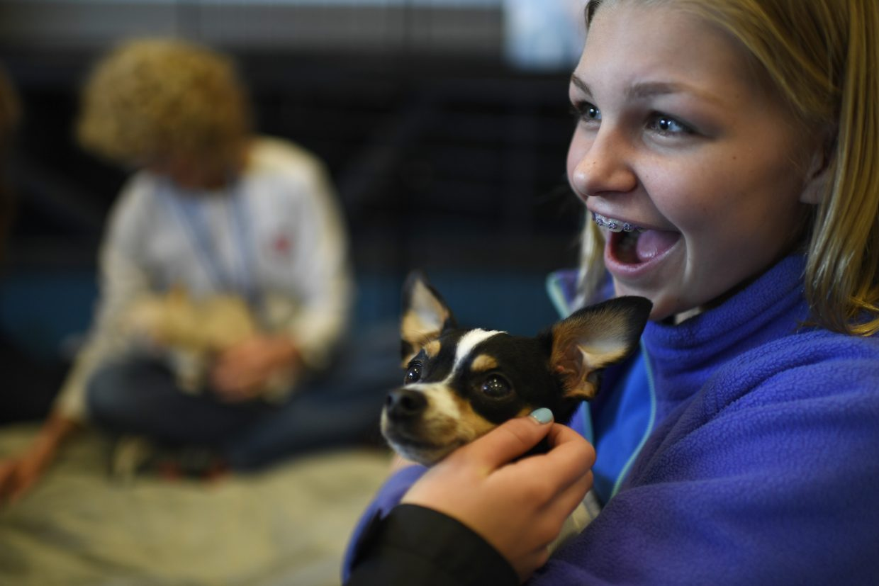 Molly McCoy, 13, holds therapy dog Deuce. Colorado Comfort Canines, Inc. participated in SkyView Academy's Coping and Overcoming event. Colorado Comfort Canines, Inc. is a Colorado-based volunteer organization out of Oak Creek that supports communities in time of extreme stress.