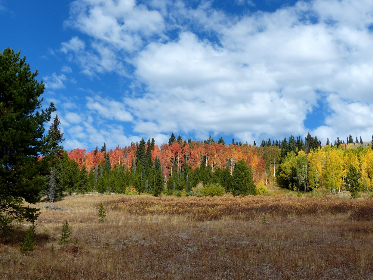 Falls colors stand out along Rabbit Ears Pass.