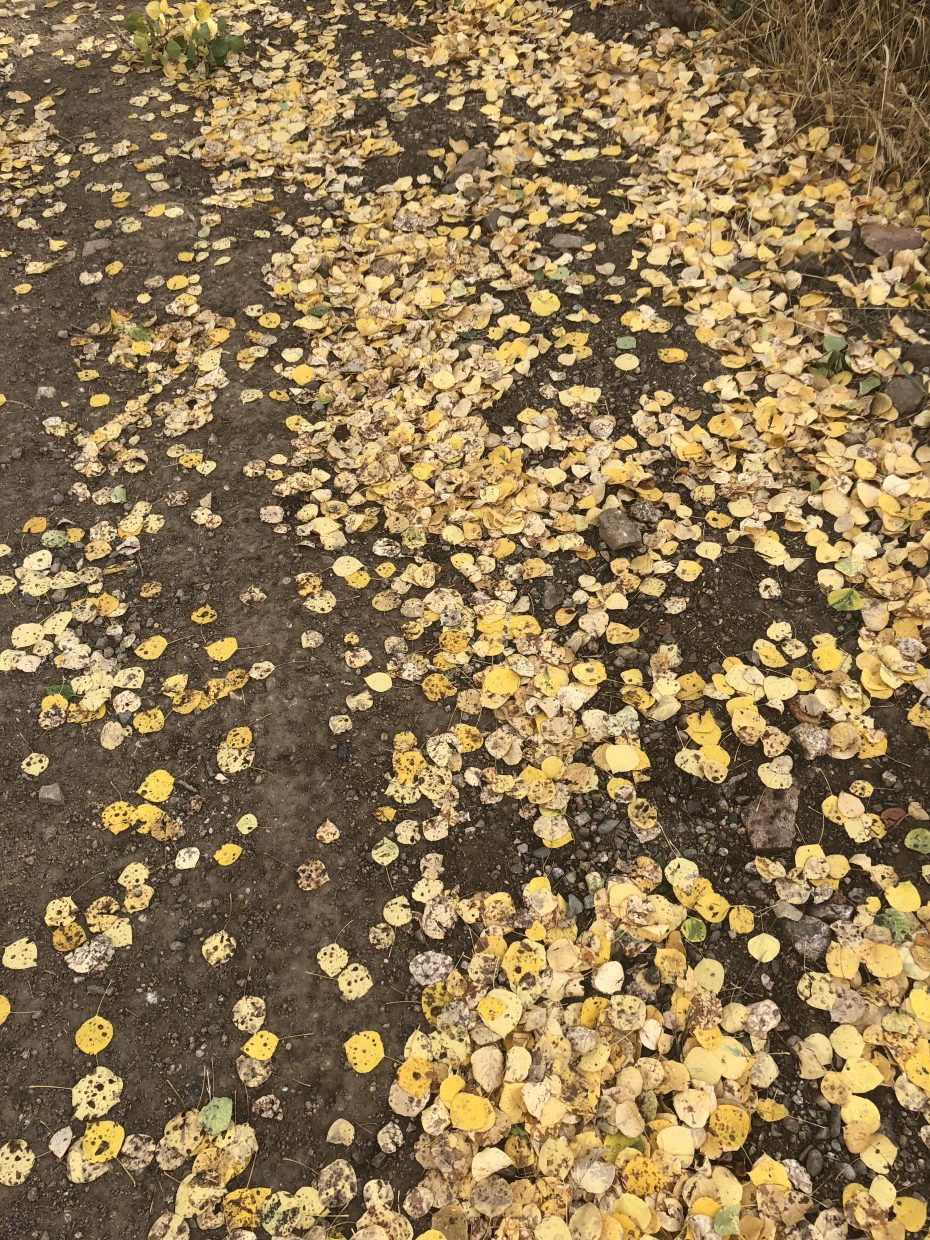 Fallen leaves dot the path along Emerald Mountain.